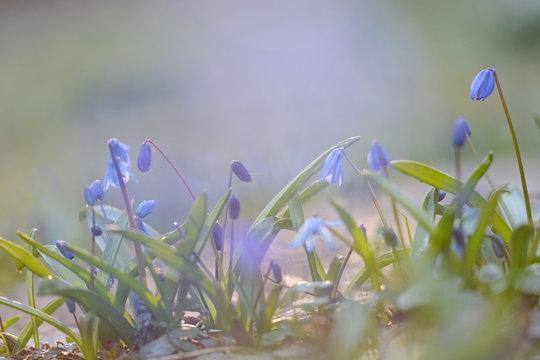 Blausterne mystische Blumen