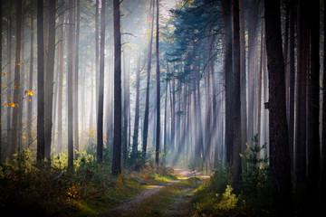 Mglisty, listopadowy poranek w lesie.