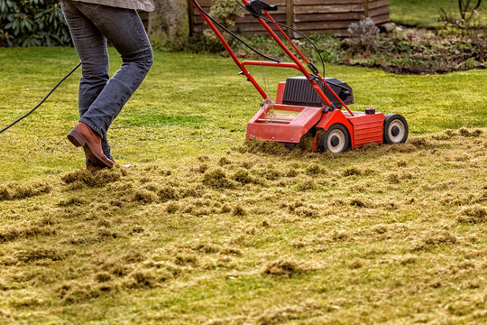 Dethatching the Lawn with an Electric Dethatcher