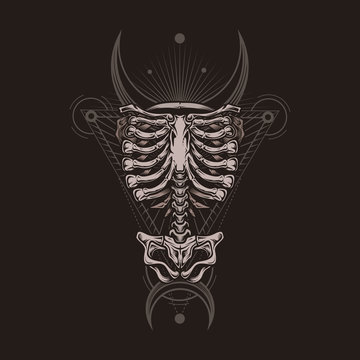 Skeleton torso poster. Stylish, hand drawn vector illustration in engraving technique of ribcage, spine and hipbones with sacred geometry on dark background. Occult poster, t-shirt print, cover.
