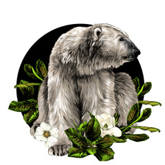 polar bear sitting full length and looking away on the background of a round composition of Magnolia flowers, sketch vector graphics color illustration on a white background