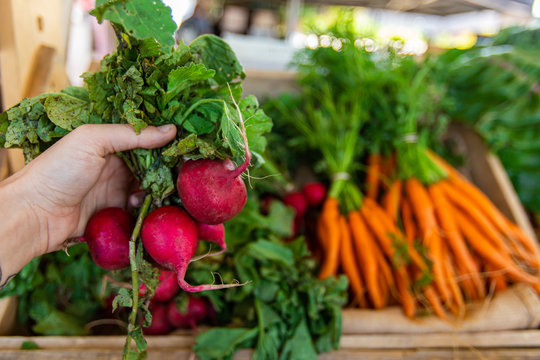 Locally sourced radishes and root vegetables are seen close up, in the hand of a person buying healthy and organic food ingredients at a harvest fair