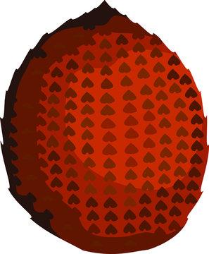 Snakefruit Fruit