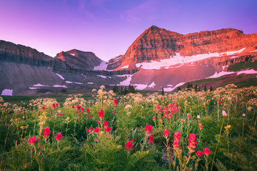 Dawn wildflowers in the Wasatch Mountains, Utah, USA.