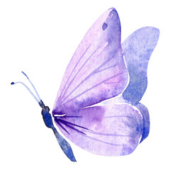 purple butterfly on an isolated white background, watercolor painting