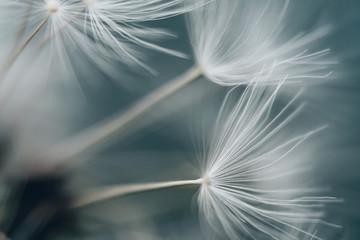 Foto op Canvas Paardenbloem dandelion
