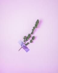 Ramo di cannabis attaccata al muro con del nastro adesivo