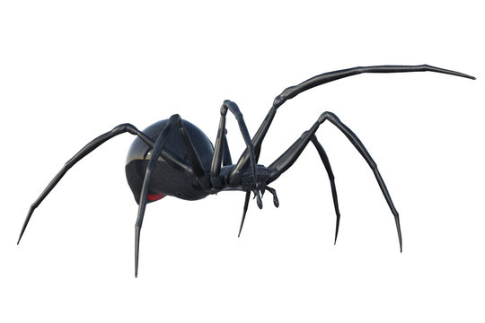 Black widow spider isolated on white, 3d render.