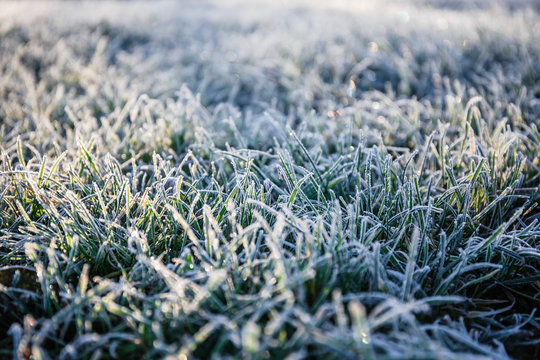 Morning dew froze on a green grass lawn and turned it into a white blanket
