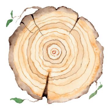 Wood slice. Tree rings. Watercolor illustration.