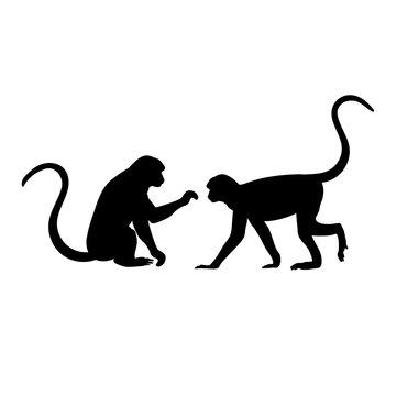 Silhouette of two Monkey. Monkey family