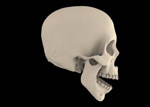 Skul on Black Background - 3D