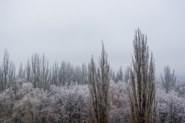 Poster Grijs Winter urban frosty landscape - snow covered trees on foggy background