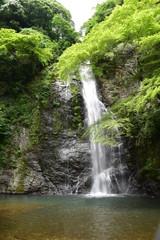 Wall Murals Waterfalls 五月の滝と緑