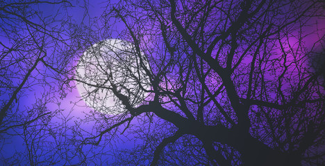 Fotomurales - Bright moon behind some bare tree branches.
