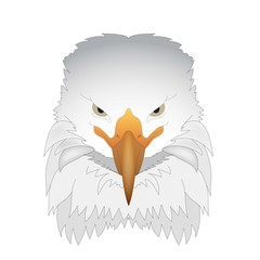 isolated picture of an eagle on a white background .vector illustration