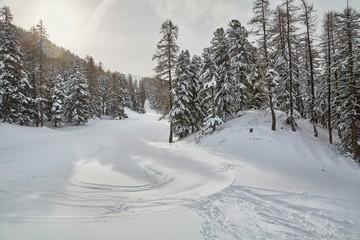 Fototapete - Skiing slope between snowy trees, beautiful winter landscape