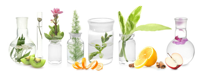 Glass flask with plant on white background