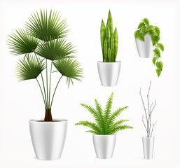 House Plants In Pot Realistic Composition