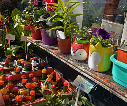 Tienda de plantas y flores