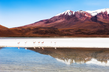 Keuken foto achterwand Cappuccino High-altitude lagoon with pink flamingos in Altiplano plateau, Bolivia. South America landscapes