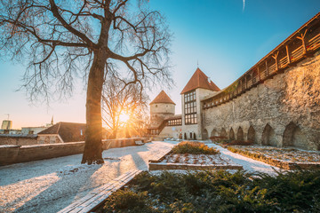 Photo sur Plexiglas Con. Antique Tallinn, Estonia. Former Prison Tower Neitsitorn In Old Tallinn. Medieval Tower At Winter Sunrise In Sunny Morning. Sun Shining Through Woods Branches. UNESCO Famous Landmark. Destination Scenic