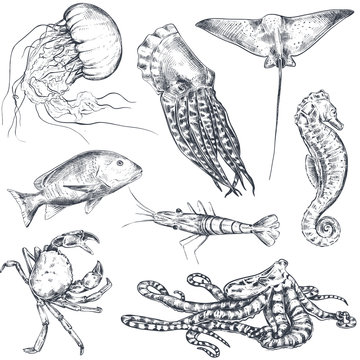 Vector monochrome seamless pattern with ocean and sea animals in sketch style.
