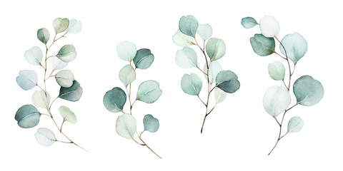 Photo sur Aluminium Illustration Aquarelle Watercolor floral illustration set - green leaf branches collection, for wedding stationary, greetings, wallpapers, fashion, background. Eucalyptus, olive, green leaves, etc.