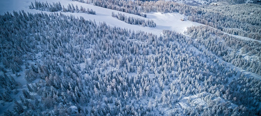 fir forest covered with fresh snow