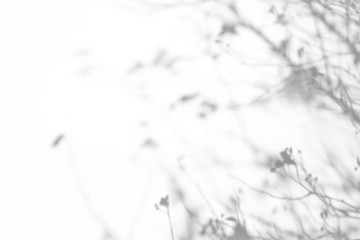 Overlay effect for photo. Gray shadows of the tree brunches on a white wall. Abstract neutral nature concept background