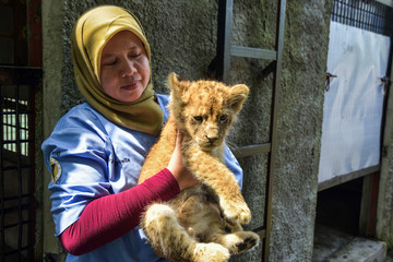 A veterinarian holds a lion cub that was rescued from an attempted smuggling in Riau province