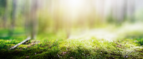 Foto auf Acrylglas Beige Wild forest panorama