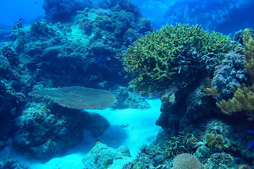 Poster Coral reefs gorgonian large branching coral on the reef / seascape underwater life in the ocean
