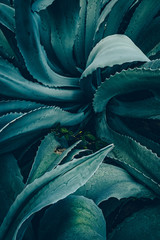 Papiers peints Cactus abstract agave close up