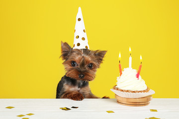 Cute Yorkshire terrier dog with birthday cupcake at table against yellow background