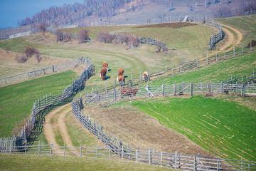 Acrylic Prints Olive Springtime landscape