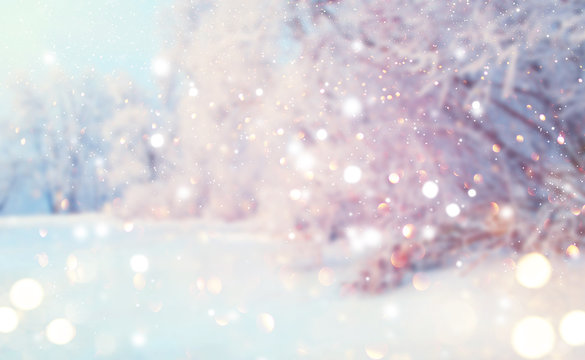 Christmas winter blurred background. Xmas tree with snow, holiday festive background. Widescreen backdrop. New year Winter art design with snowflakes. Nature scene