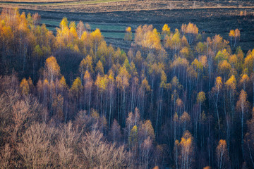 Photo sur Aluminium Bleu nuit Birch tree landscape in the fall