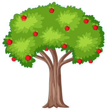 Apple tree on white background