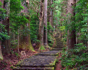 Wall Murals Road in forest Pathway in the forest at Kumano Kodo Daimonzaka Slope in Wakayama, Japan