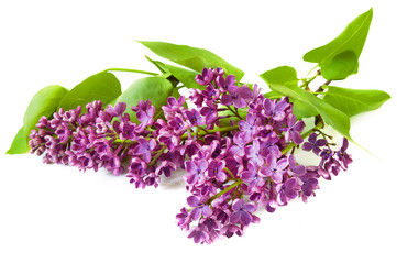 Spoed Foto op Canvas Lilac lilac flowers branch isolated on white background, lilac border