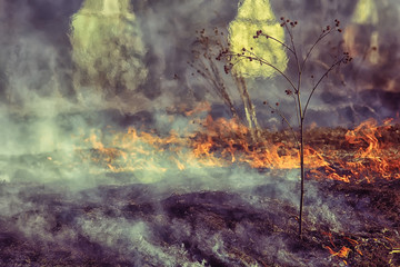 Spoed Fotobehang Olijf fire in the field / fire in the dry grass, burning straw, element, nature landscape, wind
