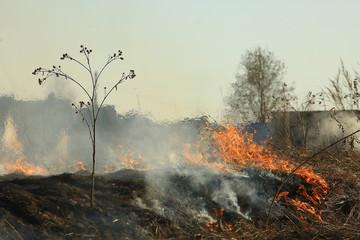 Keuken foto achterwand Beige fire in the field / fire in the dry grass, burning straw, element, nature landscape, wind