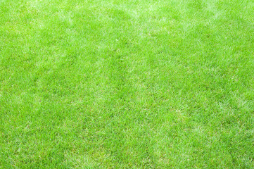 Foto auf Acrylglas Lime grun Perfect natural lawn background