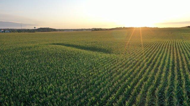 Sunrise over Corn Field (Drone)