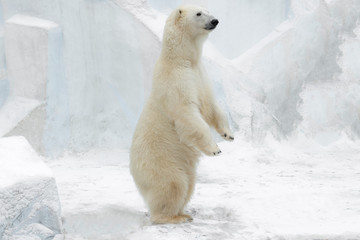 Deurstickers Ijsbeer Funny white bear. Polar bear in a funny pose.