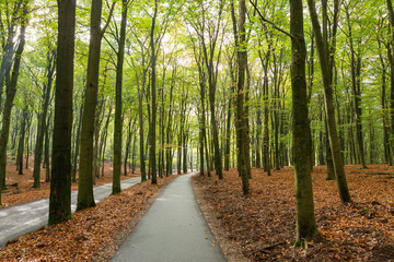 Bikepath through the forest on the Asselsche Heide