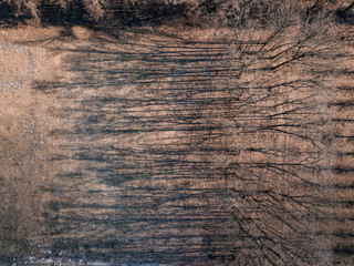 Wall Mural - Drone view of trees skeletons with shadows on a ground.