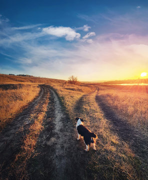 A dog purpose, vertical shot. Doubtful pup in front of a split country road, autumn sunset scene. Pet afterlife, crossroad concept choosing the way. Idyllic rural landscape and two dirt tracks.