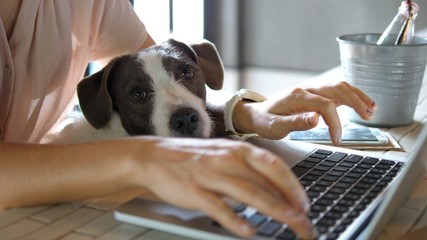 Female Hands Working On Laptop With Cute Dog Fototapete